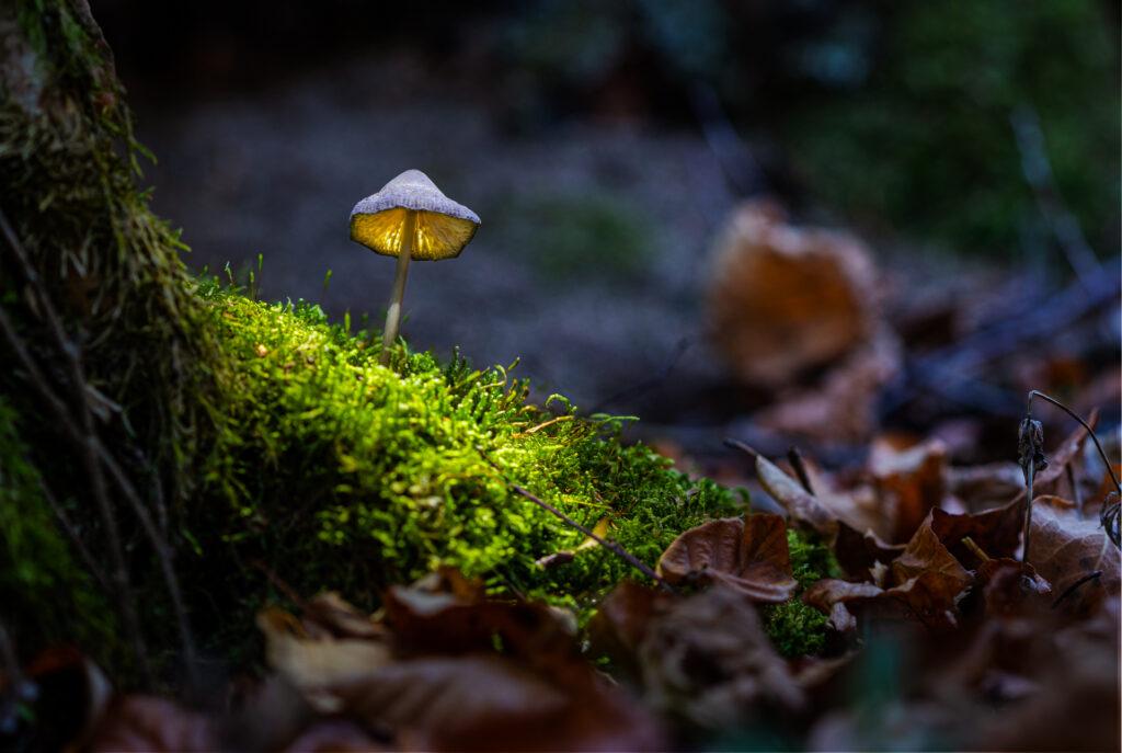 Cours de photo pour réaliser un champignon lumineux.