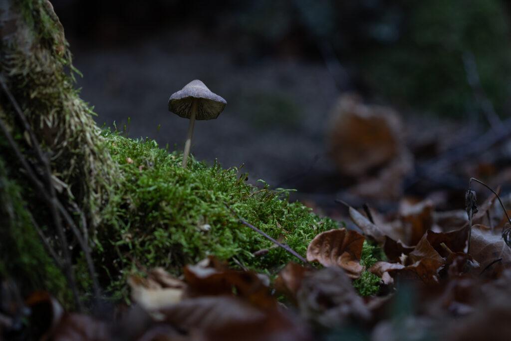 Première étape de la prise de vues de champignon lumineux : la photo du fond.