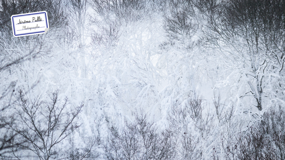Paysage minimaliste photographié sur la neige.