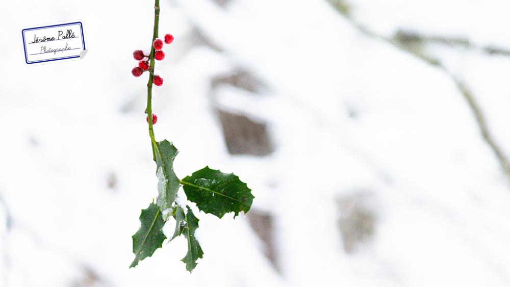 Quand on photographie sur la neige, la moindre couleur devient un point d'intérêt dans l'image.